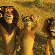 Il leone Zuba, sua moglie e il figlio Alex in un'immagine del film Madagascar 2
