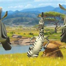 Marty e le altre zebre in un'immagine tratta dal film Madagascar 2