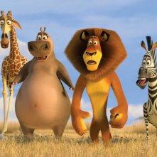 Melmann, Gloria, Alex e Marty in un'immagine tratta dal film Madagascar 2