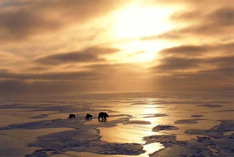 Una Suggestiva Immagine Del Documentario Earth La Nostra Terra Diretto Da Alastair Fothergill E Mark Linfield 107909