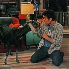 Josh Radnor con la capra in una scena dell'episodio The Leap di How I Met Your Mother