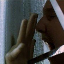 Fiore Argento in una terrificante scena del film Phenomena (1985)