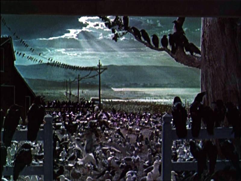 La Celebre Sequenza Finale Del Film Gli Uccelli 1963 131866