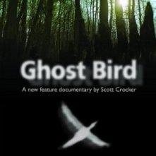 La locandina di Ghost Bird