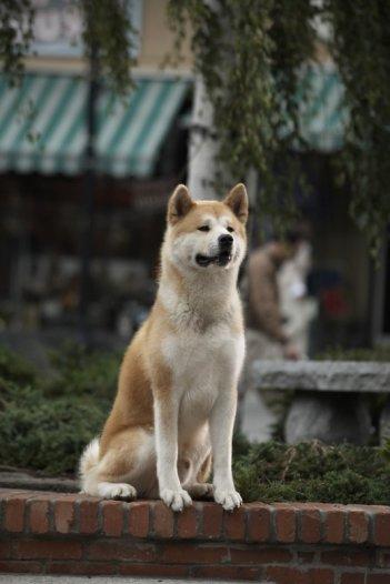 Il protagonista del film Hachiko (2009)
