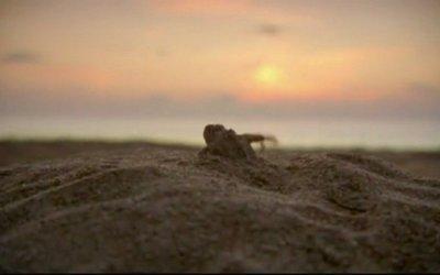 L'incredibile viaggio della Tartaruga - Trailer