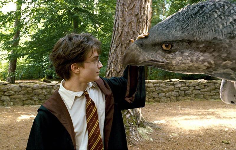Daniel Radcliffe Accarezza Fierobecco Sul Muso In Una Scena Di Harry Potter E Il Prigioniero Di Azkaban 141306