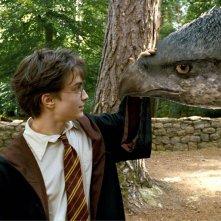 Daniel Radcliffe accarezza Fierobecco sul muso in una scena di Harry Potter e il prigioniero di Azkaban