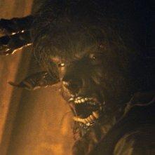 Benicio Del Toro nei panni dell'uomo lupo nel film The Wolf Man