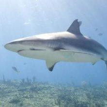 L'immagine di uno squalo dal film Oceani 3D