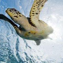 La tartaruga marina in una scena del film Oceani 3D
