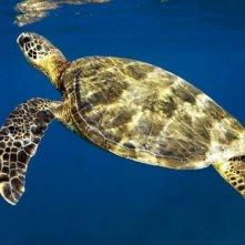 Un'immagine della tartaruga marina dal film Oceani 3D