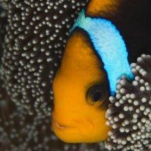 Un'immagine straordinaria dal film Oceani 3D