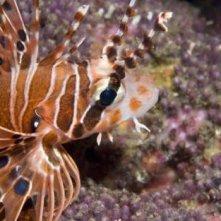 Una creatura straordinaria dal film Oceani 3D