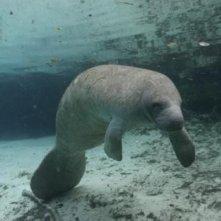 Una foca nel film Oceani 3D