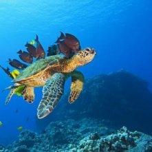 Una generosa tartaruga marina nel film Oceani 3D