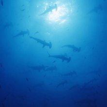 Una sequenza del film Oceani 3D