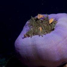 Una suggestiva immagine dal film Oceani 3D
