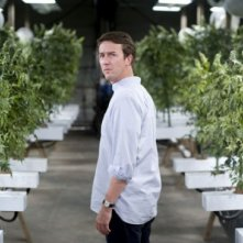 La piantagione di marijuana di Edward Norton in Leaves of Grass