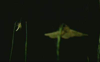Beetle Queen Conquers Tokyo - Trailer
