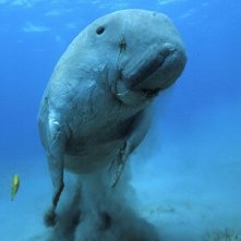 Una creatura marina di Oceans