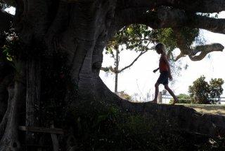 Una scena del film The Tree (2010)