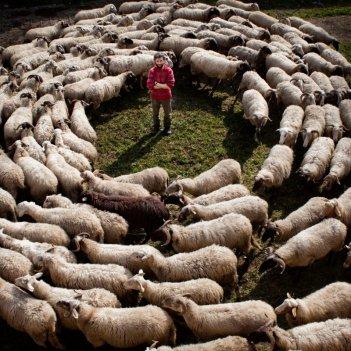 Ascanio Celestini in una scena del film La pecora nera da lui scritto, diretto e interpretato
