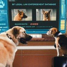 Due agenti molto speciali del film Cats & Dogs: The Revenge of Kitty Galore