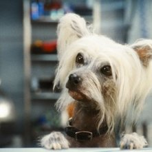 Primo piano di Peek dal film Cats & Dogs: The Revenge of Kitty Galore