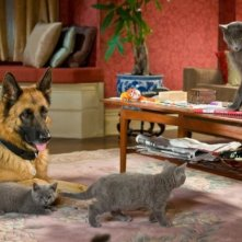 Quattro simpatiche canaglie di Cats & Dogs: The Revenge of Kitty Galore
