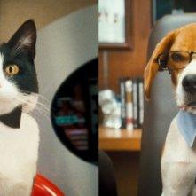 Simpatico split screen dal film Cats & Dogs: The Revenge of Kitty Galore