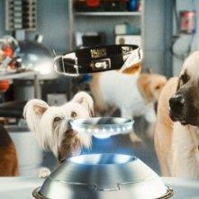 Un momento divertente del film Cats & Dogs: The Revenge of Kitty Galore