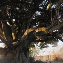 Un'immagine dell'albero che dà il titolo al film The Tree (2010)