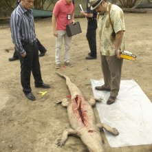 Michael C. Hall, David Zayas e Desmond Harrington e un braccio in un coccodrillo nell'episodio Slack Tide di Dexter