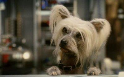 Cani & gatti: La vendetta di Kitty Galore 3D - Trailer Italiano