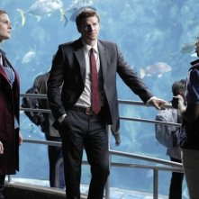 Emily Deschanel, Tembi Locke e David Boreanaz nell'episodio The Predator in the Pool di Bones