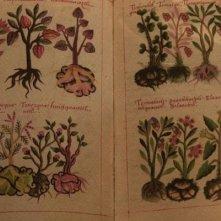 Un'immagine del 'dramma botanico' Las buenas hierbas