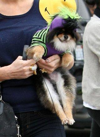 Paris Hilton regge uno dei suoi cagnolini dopo aver fatto acquisti di Halloween da 'Trashy Lingerie'