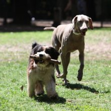 Spugna con un altro protagonista canino della fiction Un cane per due