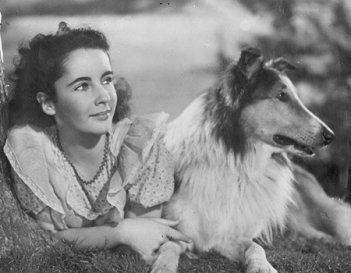 Una giovanissima Liz Taylor con il cane Lassie