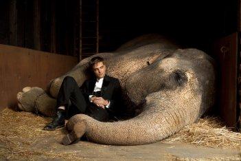 Un wallpaper di Robert Pattinson e l'elefantessa protagonista di Come l'acqua per gli elefanti