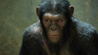L'alba del pianeta delle scimmie: un primo piano di una delle scimmie create dalla Weta Digital