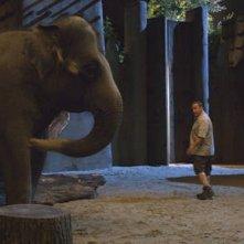 Kevin James in una scena del divertente The Zookeeper (Il signore dello zoo)