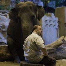 The Zookeeper (Il signore dello zoo): una scena del film con Kevin James