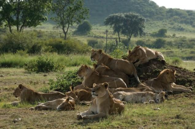 Una Immagine Delle Protagoniste Di African Cats 209563