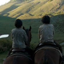 Una bellissima immagine di Cavalli