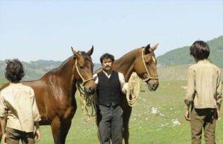 Una sequenza di Cavalli (2011) di Michele Rho
