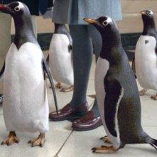 Gli irresistibili Pinguini di Mr. Popper in una scena del film