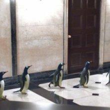 Le adorabili star de i Pinguini di Mister Popper