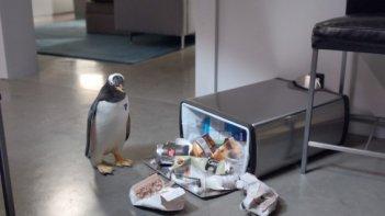 Una immagine del film i Pinguini di Mister Popper (2011)